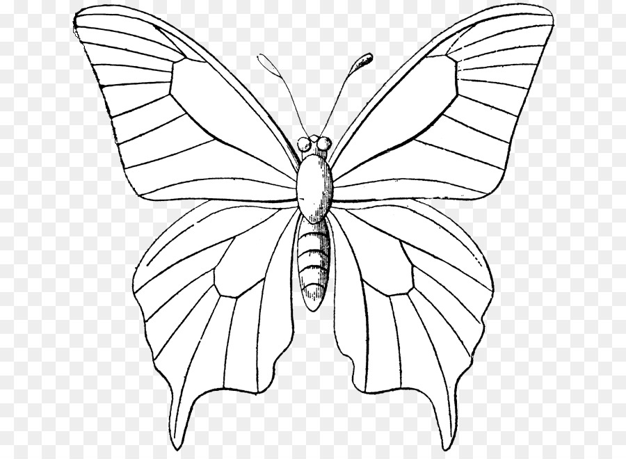 Outline Drawing Of Butterfly