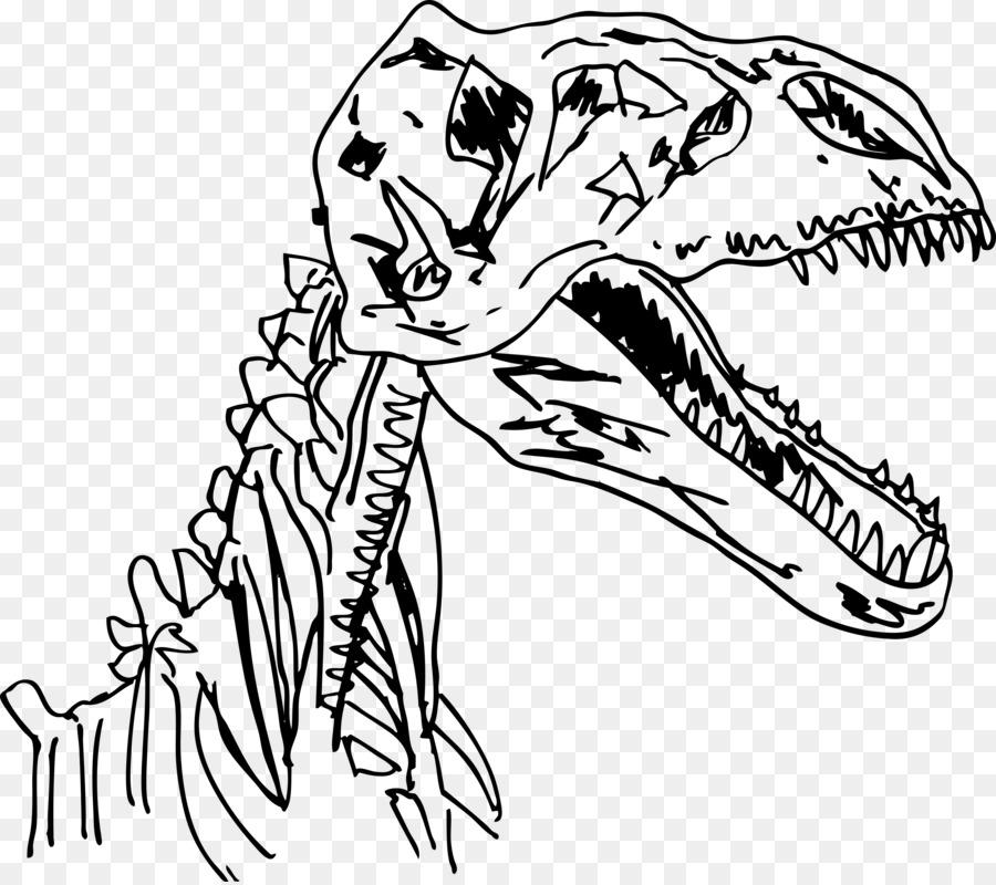 Was absolute Datierung in Bezug auf Fossilien ist