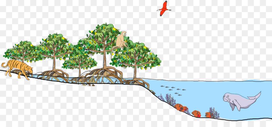 Florida mangroves Tropical and subtropical moist broadleaf ...  Florida mangrov...