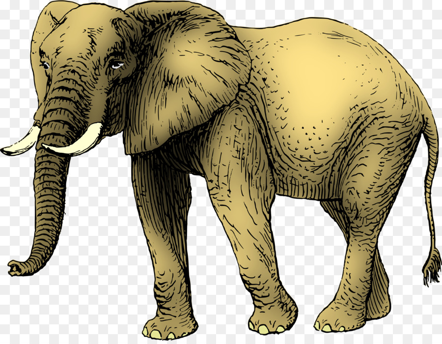 african elephant asian elephant clip art elephants clipart png rh kisspng com Baby Elephant Clip Art free clipart of elephants