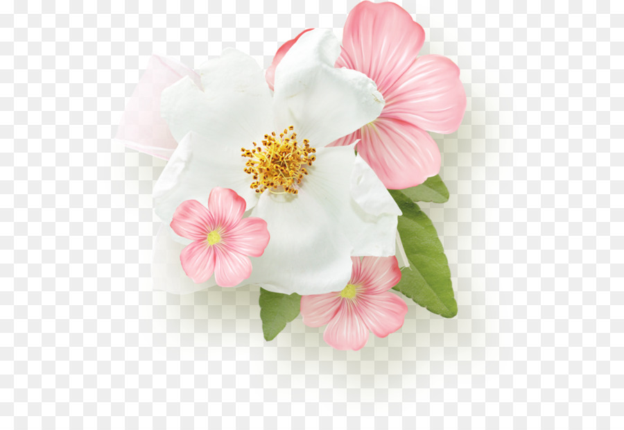 Pink Flower Day White Magnolia Flower Png Download 600604