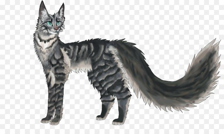 Maine Coon American Wirehair Kitten Warriors Tabby cat - mountain ...