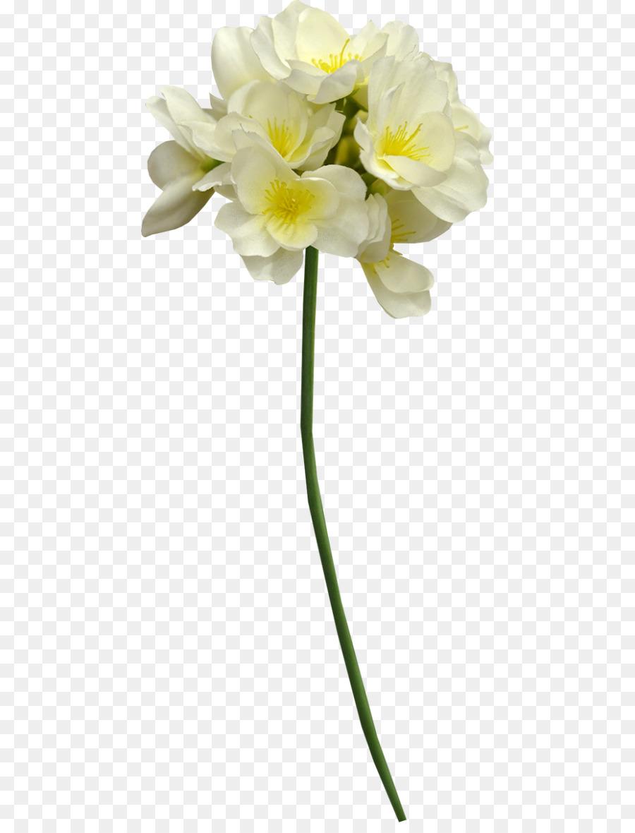 Cut flowers cape jasmine plant stem white flower png download cut flowers cape jasmine plant stem white flower mightylinksfo