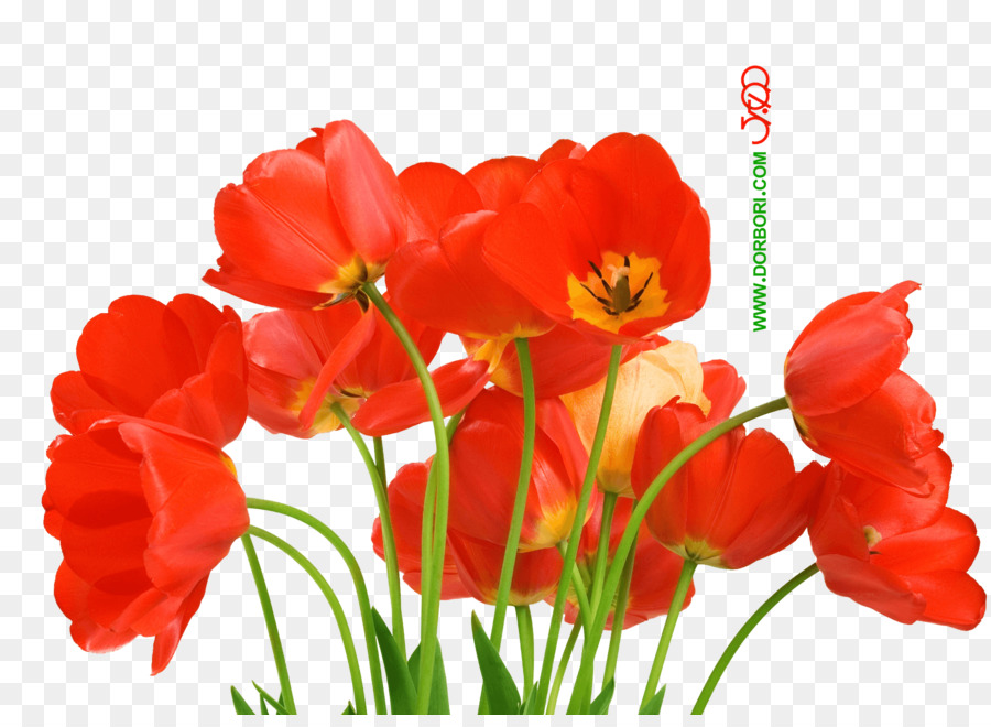 Desktop Wallpaper Flower Love Petal
