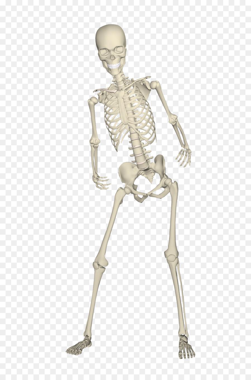 Human Skeleton Skull Bone Skeleton Png Download 12801920 Free