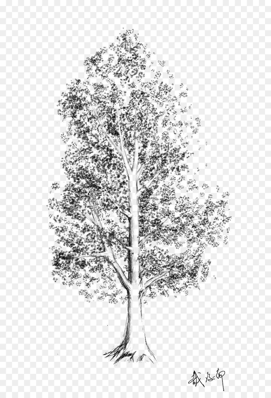 Árbol de Abedul de plantas Leñosas de Hoja - croquis de árbol ...