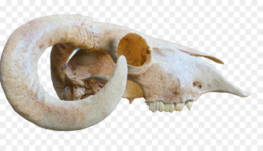 bone shader light skull mental ray shading material png download