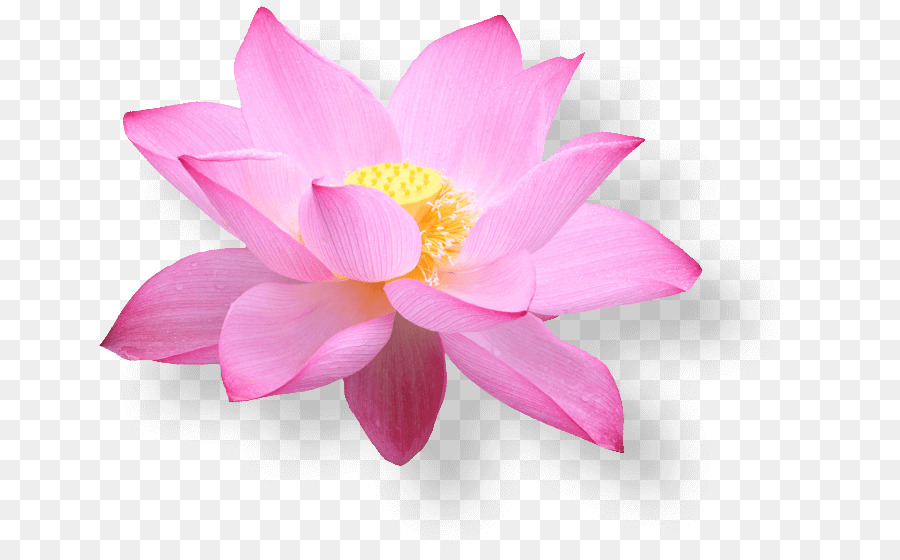Vietnam Airlines E Commerce Hanoi Airline Ticket   Pink Lotus In Full Bloom