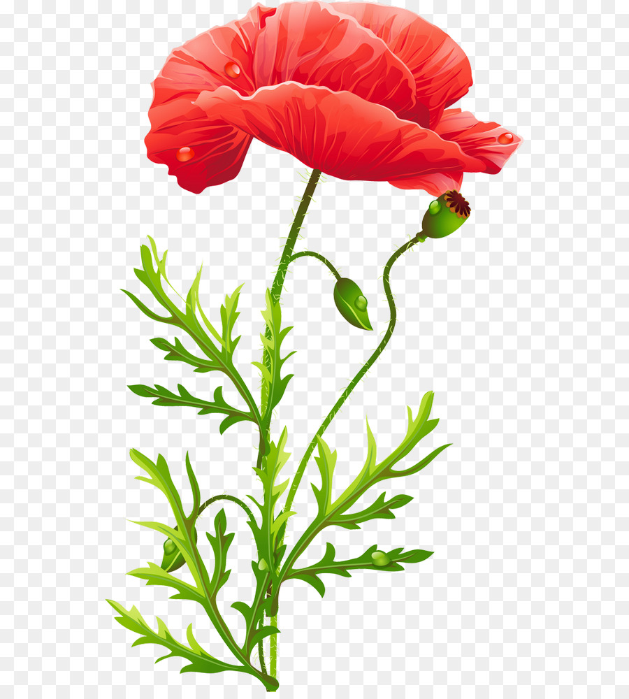 Poppy Flower Poppies Png Download 600990 Free Transparent
