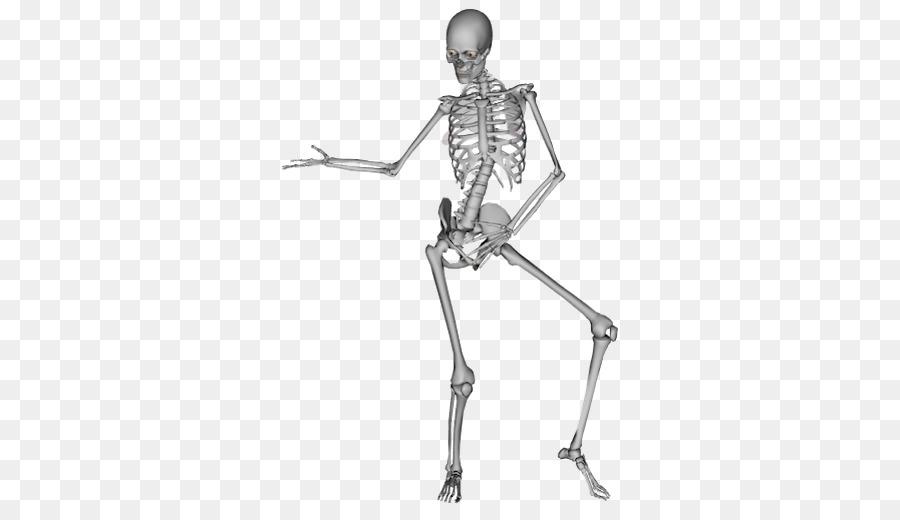 The Human Skeleton Dance Bone Human Bones Png Download 512512