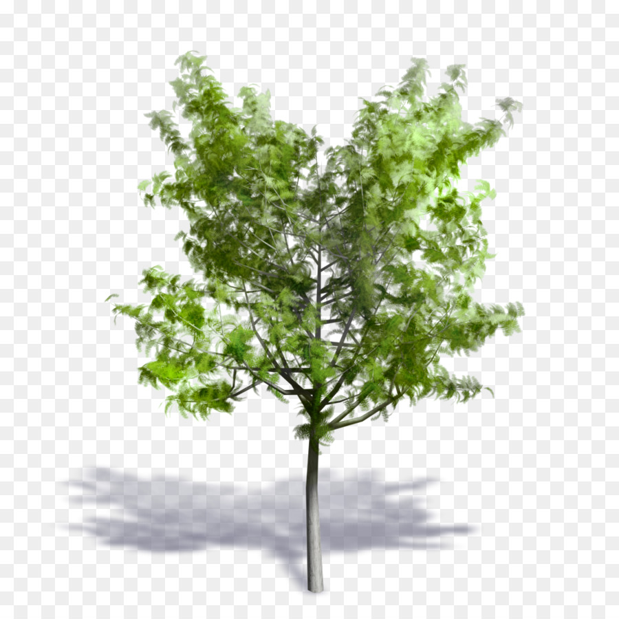 Twig Background png download - 1000*1000 - Free Transparent