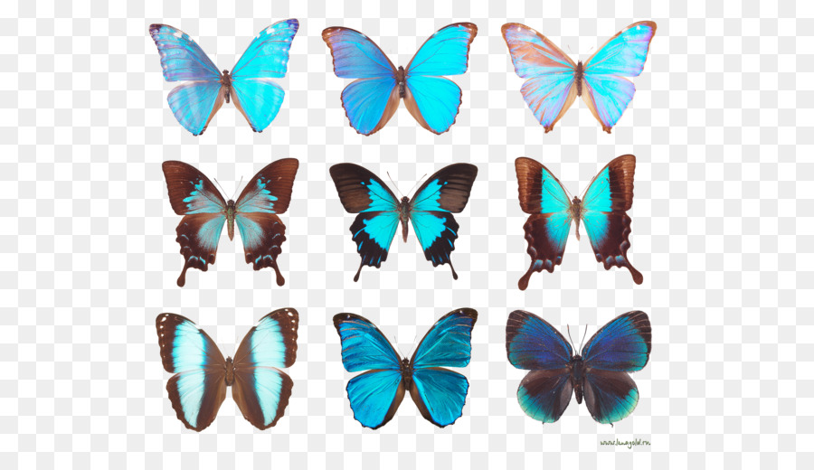 Butterfly diagram clip art butterfly png download 600504 free butterfly diagram clip art butterfly ccuart Choice Image