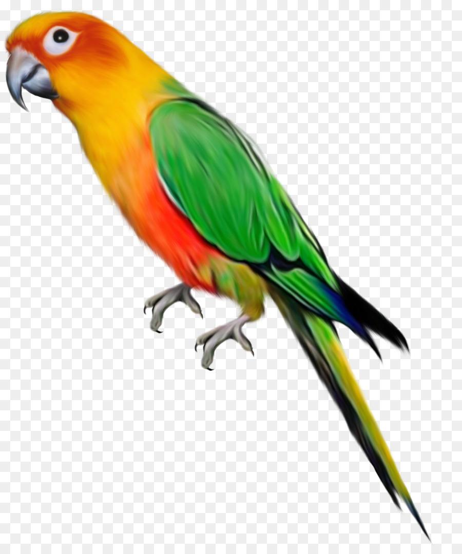 parrot bird desktop wallpaper clip art parachute 0 2 1 png rh kisspng com free parakeet clipart