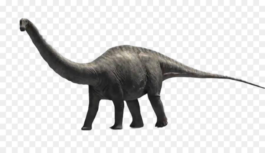 Apatosaure diplodocus brachiosaurus dinosaure tyrannosaure - Dinosaure diplodocus ...