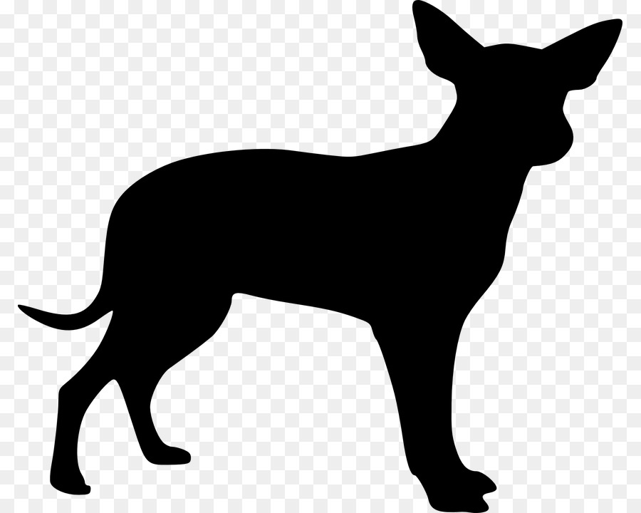 Mexican Hairless Dog Chihuahua Zeichnung Clip Art Hunde Vektor Png