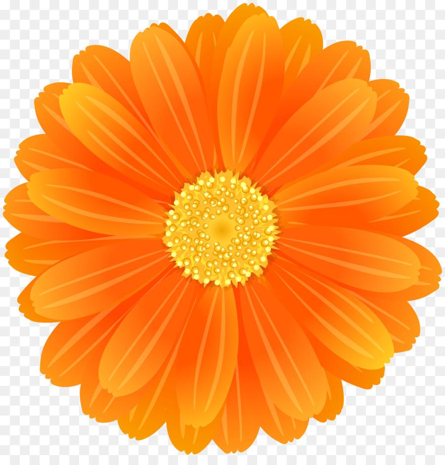 Transvaal daisy flower desktop wallpaper orange clip art orange transvaal daisy flower desktop wallpaper orange clip art orange flower izmirmasajfo