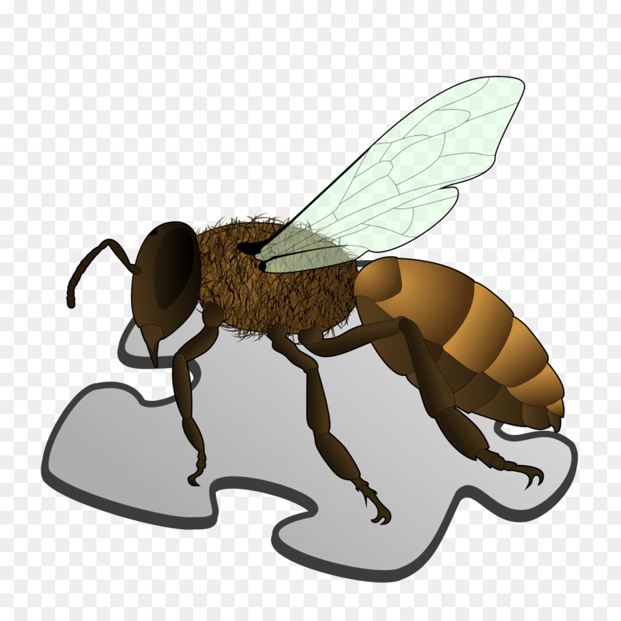 Queen bee Anatomy Worker bee Bee sting - Stub png download - 1024 ...