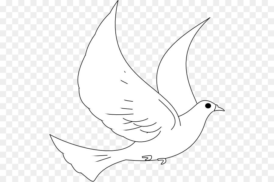 Columbidae Tortuga Dibujo Clip art - paloma vector png dibujo ...