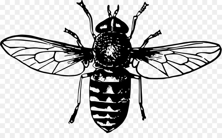Queen Bee Drawing Honey Bee Clip Art
