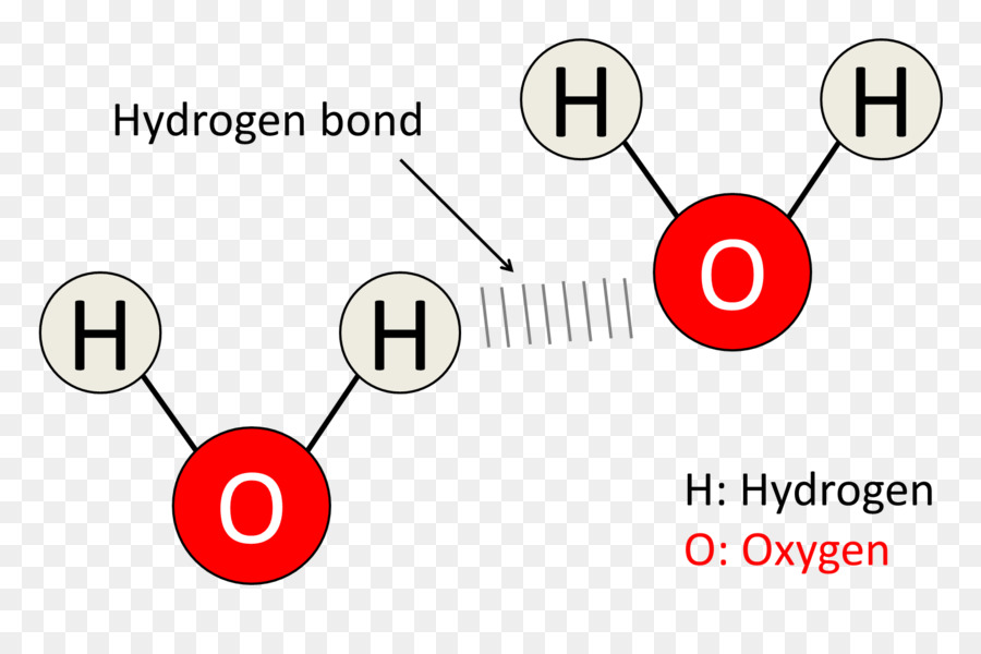 Diagram Hydrogen Bond Molecule Water Chemical Bond Oxygen Bubble