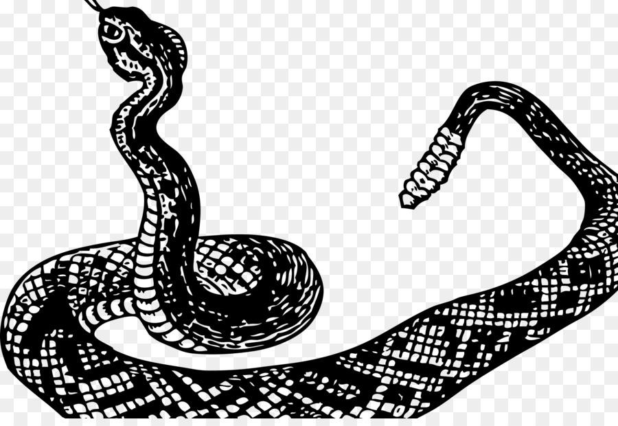 La serpiente de cascabel Boa constrictor Clip art - la serpiente png ...