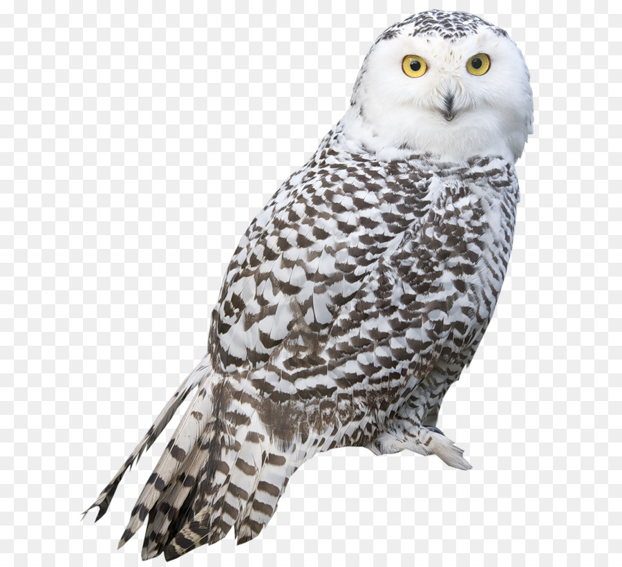 Bird Snowy owl Great Grey Owl Clip art - creative owl png ...