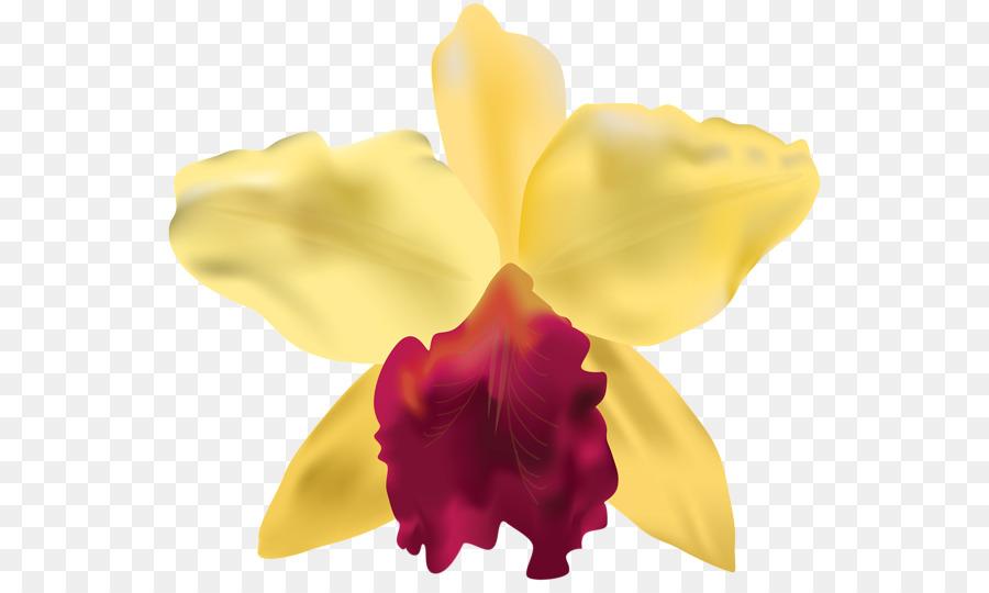 Gráfico de los Marcos de la Flor de las Orquídeas Clip art ...