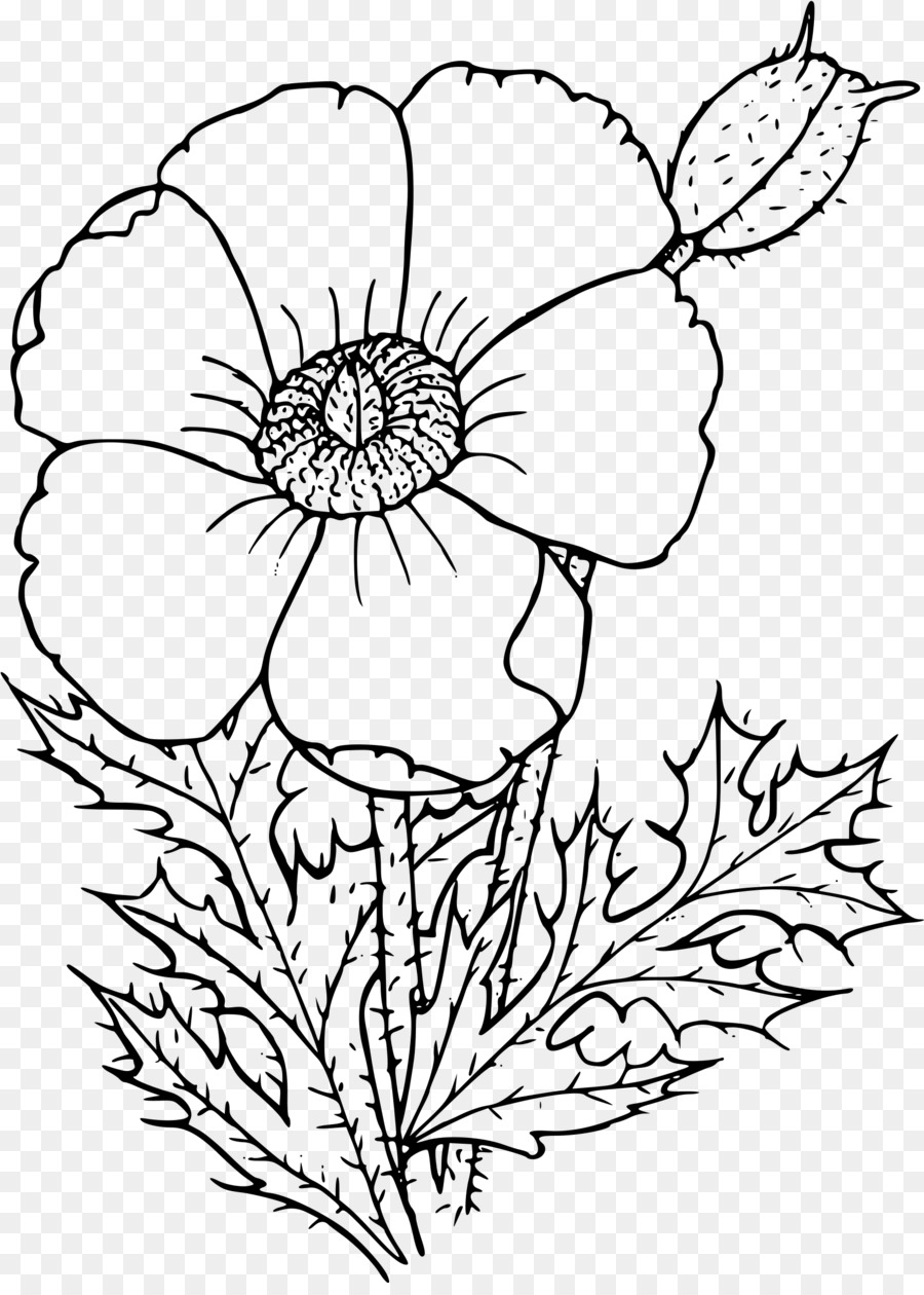 California Poppy Coloring Book Drawing Flower