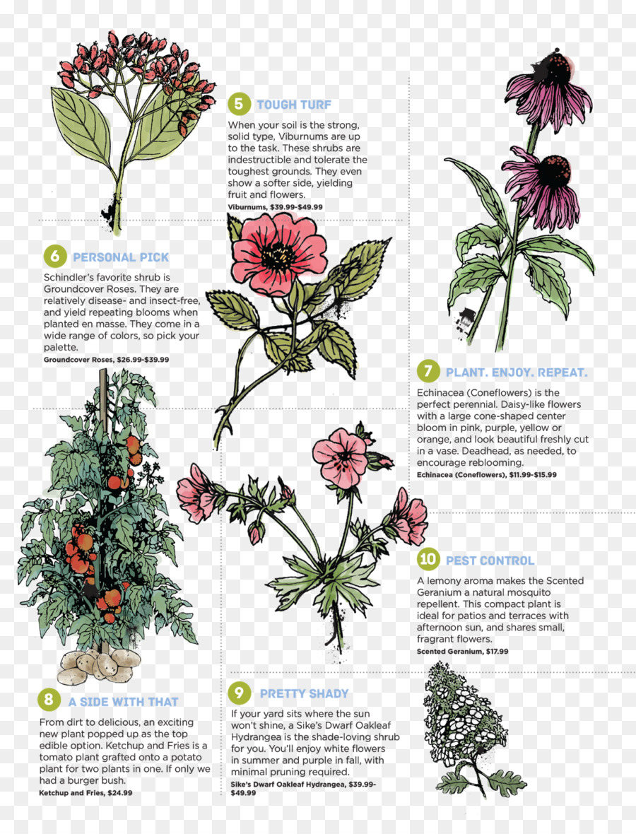 Perennial plant foraging feasting a field guide and wild food perennial plant foraging feasting a field guide and wild food cookbook flower purple deadnettle plant poster mightylinksfo