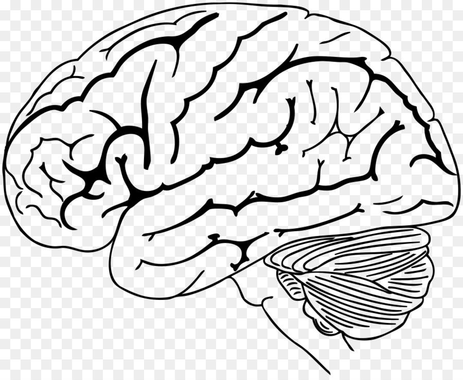 The Human Brain Coloring Book Anatomy - brain cartoon png download ...