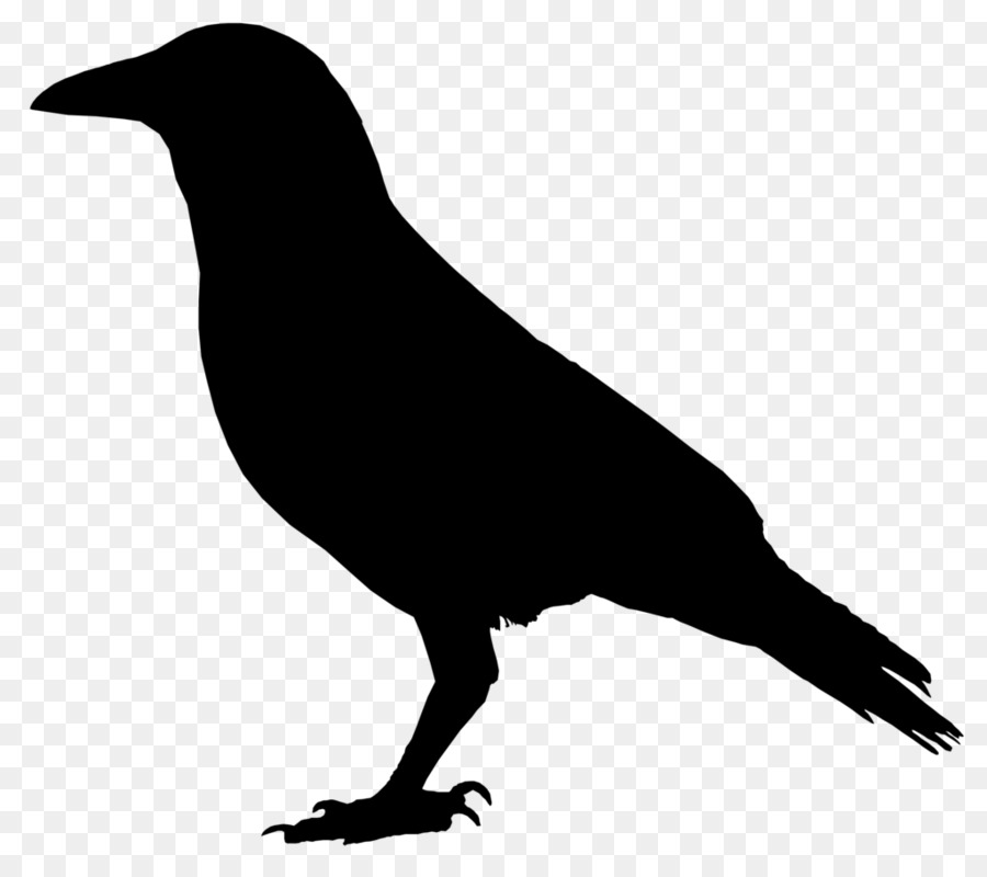 Crow Drawing Clip Art Crow Vector 1024 898 Transprent