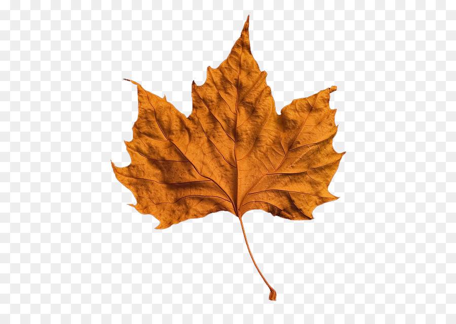 Hoja de otoño color de Clip art - hojas de primavera Formatos De ...