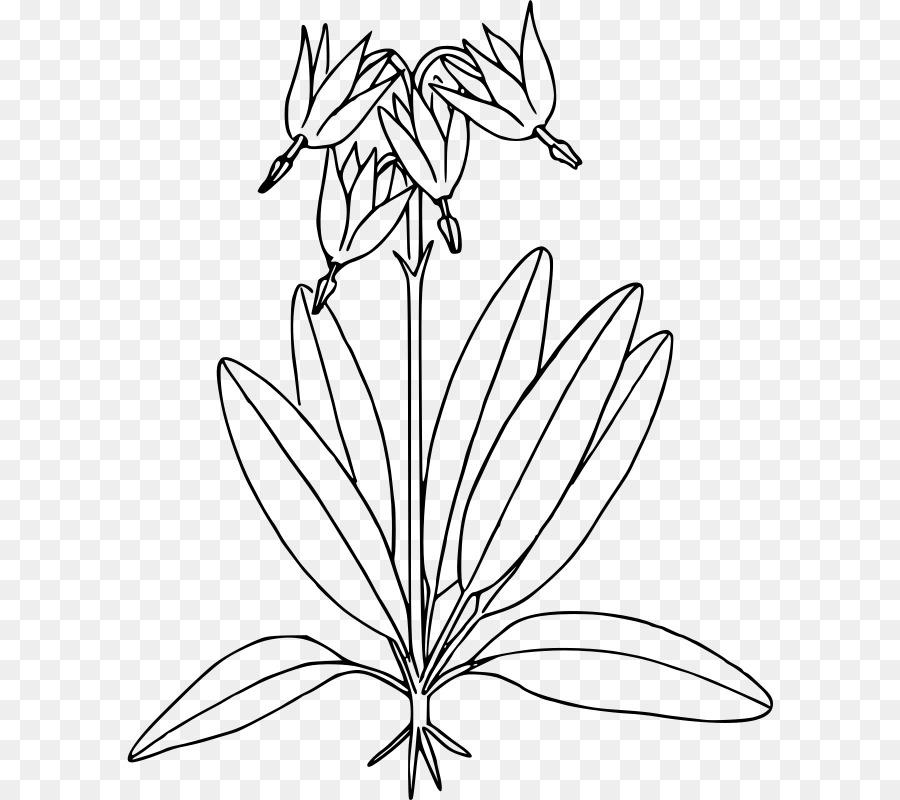 Botánica Libro para Colorear (HarperCollins Libros para Colorear de ...