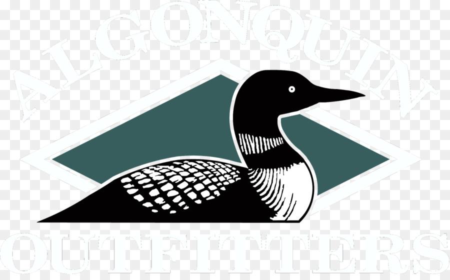 common loon drawing bird duck clip art cartoon lake water png