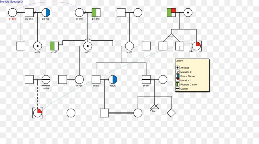 Wiring diagram pedigree chart drawing drawing software png wiring diagram pedigree chart drawing drawing software ccuart Choice Image