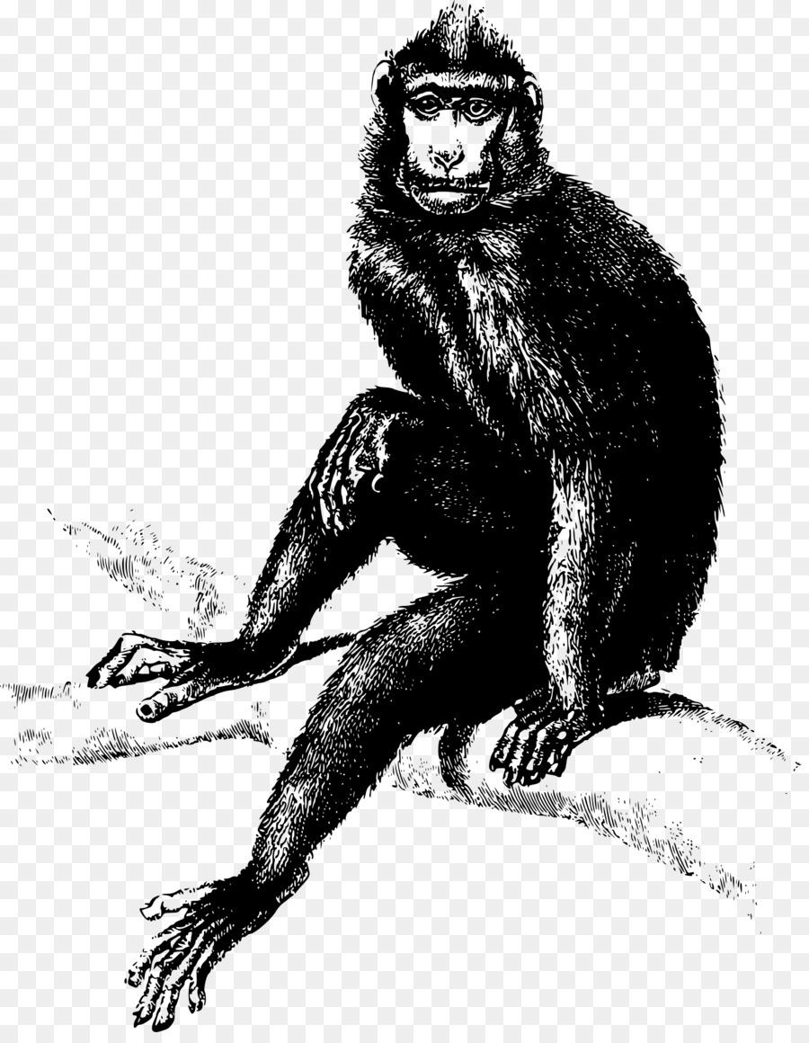 Mono Gorila Clip art - mandril Formatos De Archivo De Imagen - 1881 ...