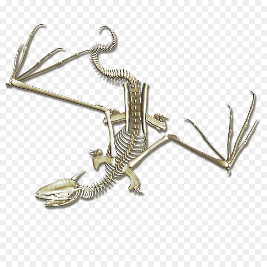 Esqueleto humano Huesos de Dragón Mapa - amarilleado Formatos De ...