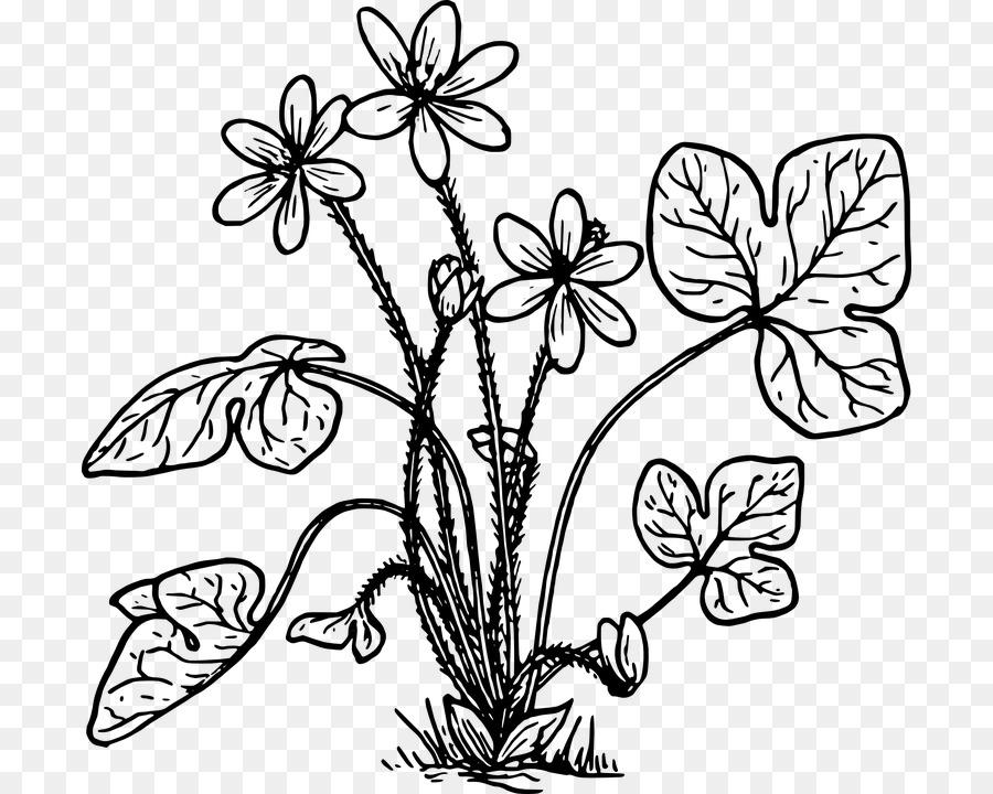 Anemone hepatica libro para Colorear, imágenes prediseñadas - árbol ...