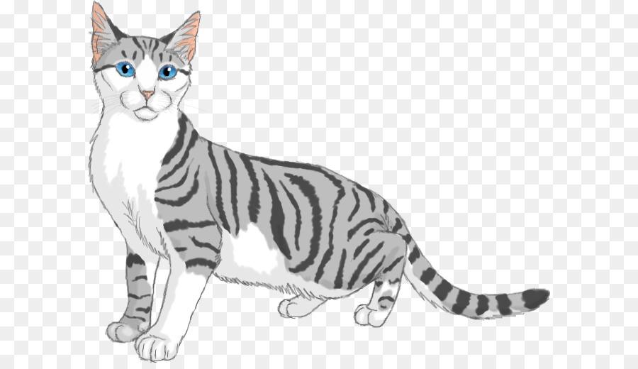 American Shorthair Kitten American Wirehair California Spangled ...
