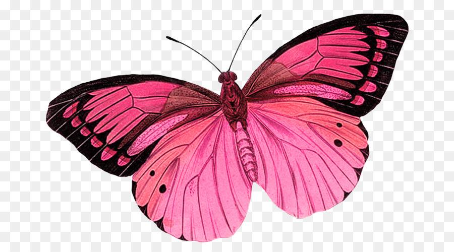 Monarch butterfly Greta oto Clip art - pink butterfly ...