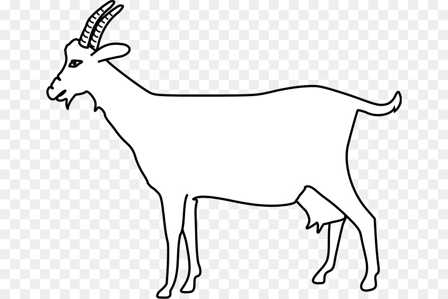 De cabra Cuerno de Antílope anatomía Humana Ovejas - cabra blanca ...