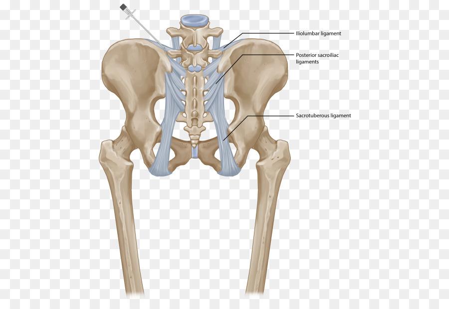 Hip Sacroiliac joint dysfunction Posterior sacroiliac ligament ...