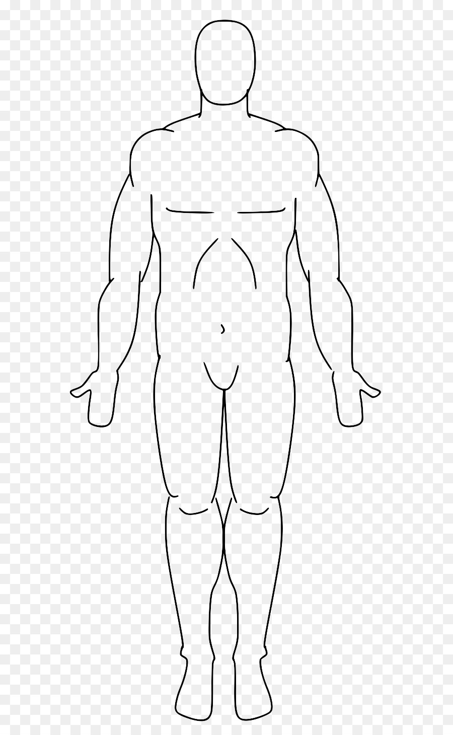 Standard anatomical position Anatomy Human body Body Facts ...