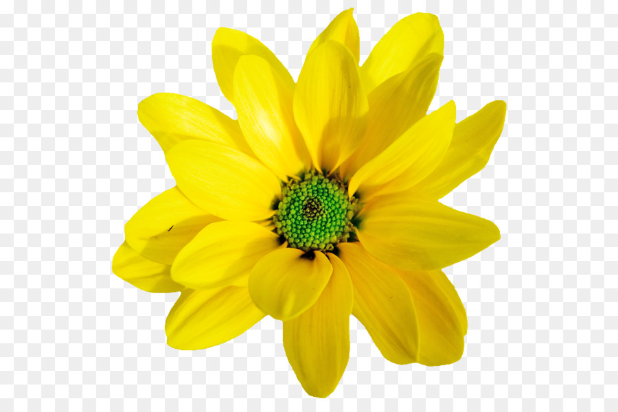 Yellow orange flower clip art flowers blooming in spring png yellow orange flower clip art flowers blooming in spring mightylinksfo