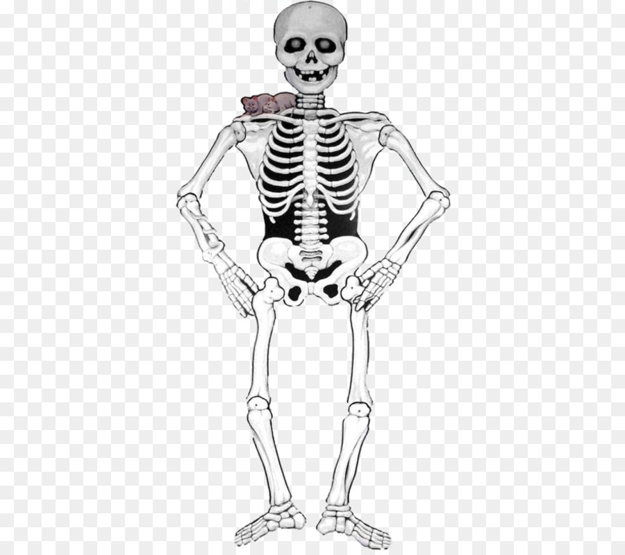 Skeleton Halloween Smiffys Carnival Paper Identity Cards Can Not