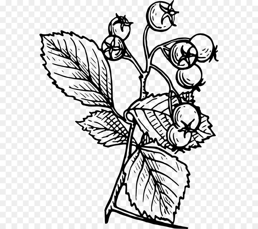 Espino Dibujo De Árbol - árbol de espino Formatos De Archivo De ...