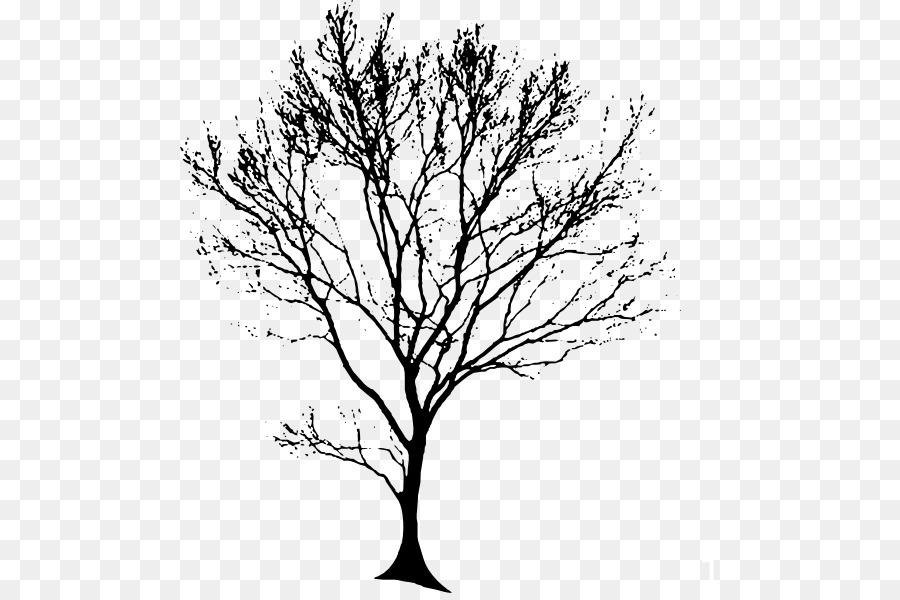 Drawing Tree Oak Line Art Clip Art