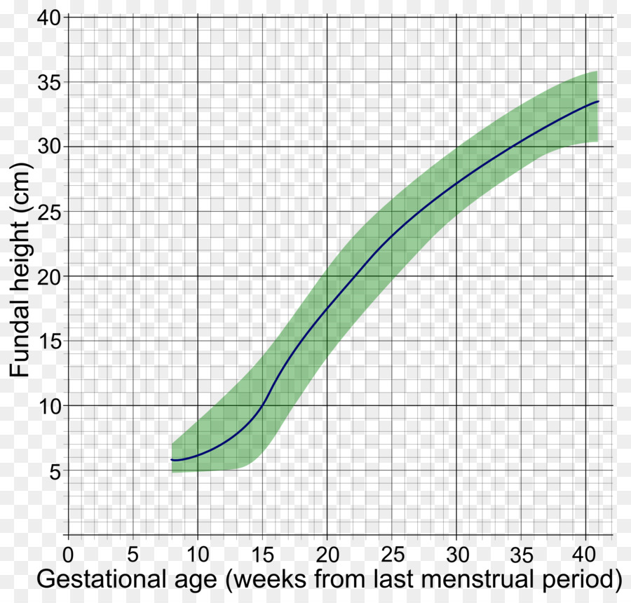 Fundal Height Gestational Age Uterus Growth Chart Human Height