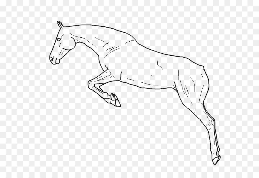 Mula caballo Árabe Potro Semental Mustang - saltando de imágenes ...