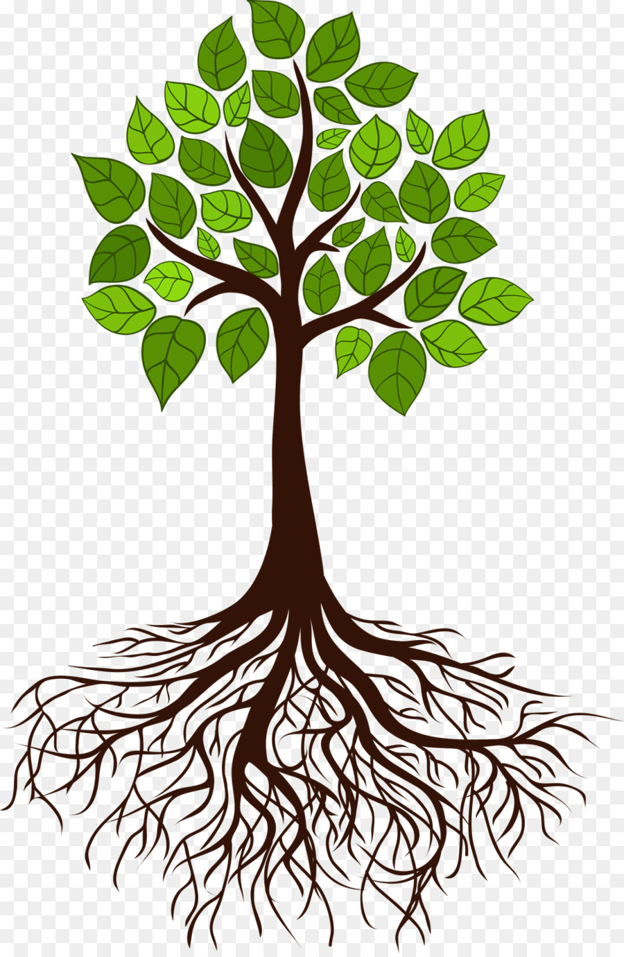 tree root branch tree roots png download 982 1500 free transparent plant png download. Black Bedroom Furniture Sets. Home Design Ideas